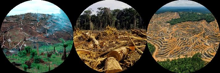 deforestación masiva