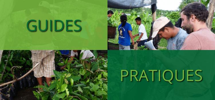 Guides pratiques de la reforestation et de l'agroforesterie