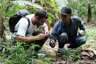 Recolectando semillas de árboles frutales en el bosque