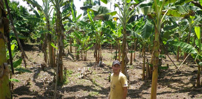 replanter des arbres fruitiers en for t tropicale ishpingo. Black Bedroom Furniture Sets. Home Design Ideas