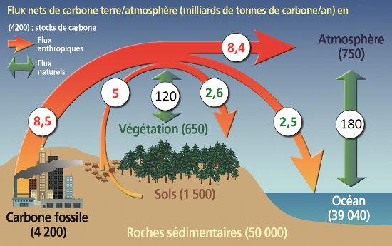 Le cycle du carbone sur la planète