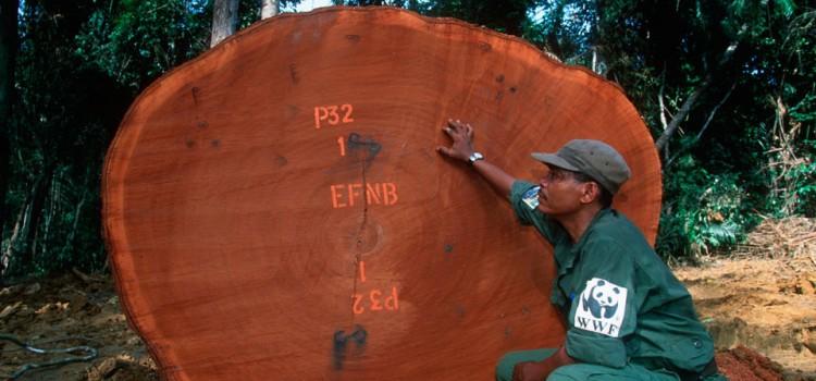 Surveiller l'exploitation du bois dans les forêts tropicales