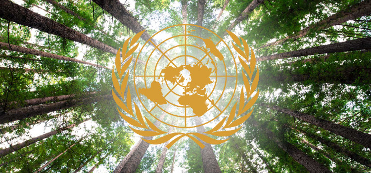 Forum des Nations Unies sur les forêts
