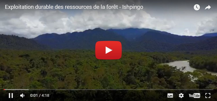 Vidéo - Exploitation des fruits issus de la reforestation
