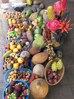 Fruits tropicaux issus de la reforestation