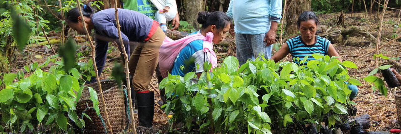 Travail de reforestation communautaire