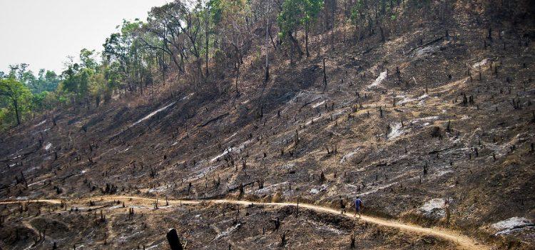 Déforestation massive par la méthode de la terre brulée