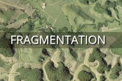La fragmentation des forêts tropicales est critique