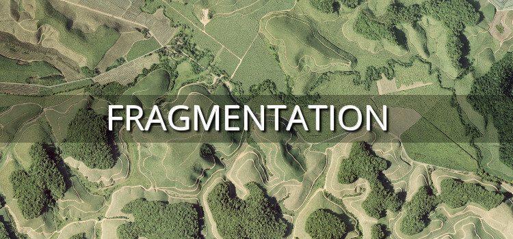 Fragmentation des forêts tropicales
