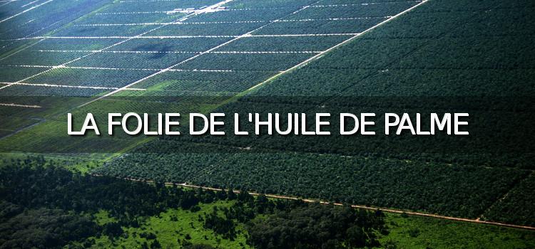 [Vidéo] La folie de l'huile de palme