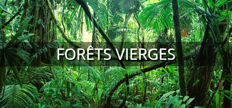 Protéger les forêts intactes de la planète