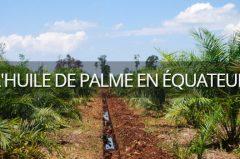 L'huile de palme en équateur