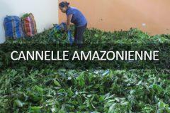 Éloge de la cannelle amazonienne