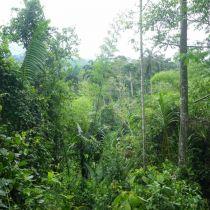 Au milieu de la forêt vierge