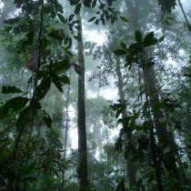 Au plus profond de la forêt