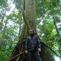 Un bel arbre au milieu de la forêt