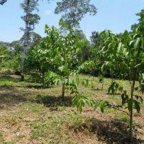 Reboisement avec des arbres fruitiers
