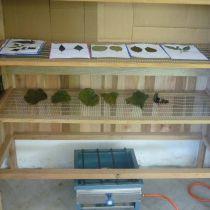 Herbier de feuilles médicinales
