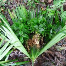 Jeune plant en croissance
