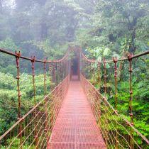 Un pont suspendu à travers la forêt primaire