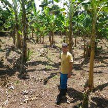 Reforestation avec des arbres fruitiers