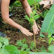 Plantation d'un jeune arbuste