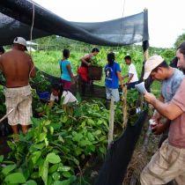 Distribution des jeunes arbres
