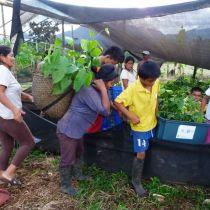 Distribution des jeunes plants