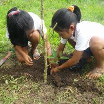 Jeunes filles plantant un arbre