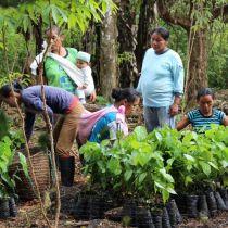 Reforestation en équipe