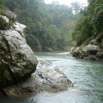 Un rivière traverse la forêt
