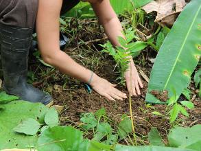 Agroforesterie et reforestation