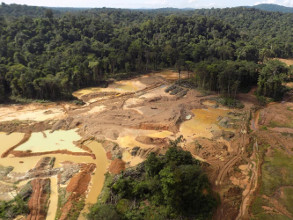 Illegal golg mining in the Amazon